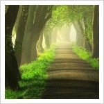 Estrecho es el camino