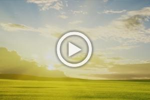4-videos
