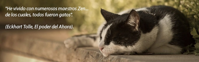 gatos_tolle