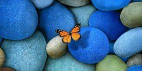 El aleteo de una mariposa