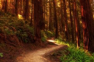 El camino del corazón (continuación)