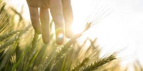 Encuentro con Dios a través de los sentidos