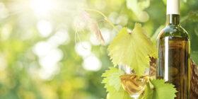 La vid, el vino y el escanciador