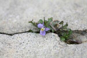 Pesimismo, optimismo y esperanza