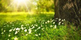 La naturaleza y la intuición poética