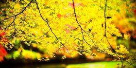 El árbol amarillo