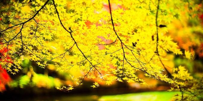 arbol-amarillo