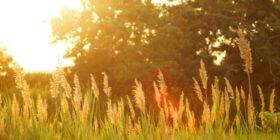 Espiritualidad y conservación