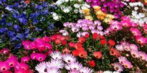 Las flores más hermosas