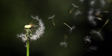 Los caminos del viento