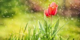 Lecciones de lluvia