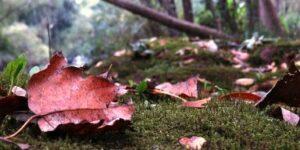 El llamado del otoño
