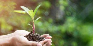 ¿Economía gris o economía verde?