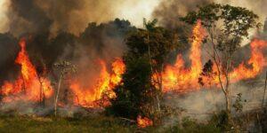 Por qué necesitamos la Amazonia