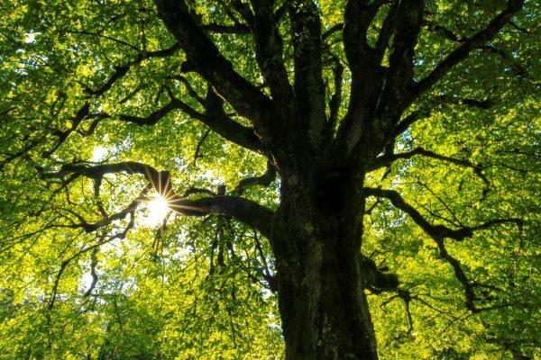 El árbol de las prácticas contemplativas
