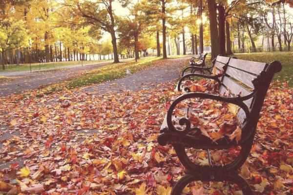 Un otoño diferente