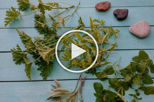 Práctica para trabajar con plantas medicinales