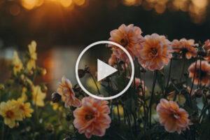 Tiempo de florecer