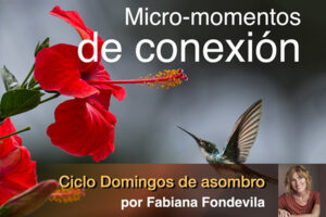 Micro-momentos de conexión