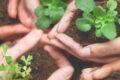 ¿Es la gratitud el camino hacia un mundo mejor?