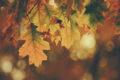 Luz de otoño