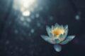 Aceptar, fluir y transformar